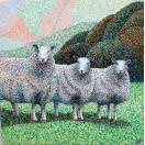 Exmoor Sheep SOLD
